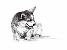 Puppy dog hand drawn, black and white illustration sketch Stock Photography