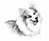 Puppy dog hand drawn sketch. Royalty Free Stock Photos