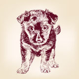 Puppy dog hand drawn vector llustration Stock Photo