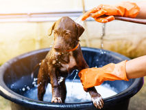 Puppy dog Having a shower Stock Image