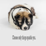 Puppy dog with headphones listening to music Stock Photos