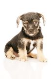 Puppy dog isolated on white Stock Photo