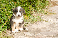 Puppy dog. Little cute dog sitting on the ground Stock Photography