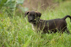 Puppy dog. Is looking on me from the grass Royalty Free Stock Photos
