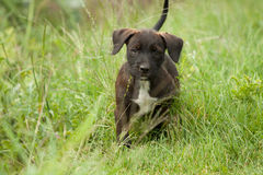 Puppy dog. Is looking on me from the grass Royalty Free Stock Images