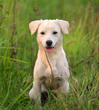 Puppy dog in  meadow grass Stock Photos