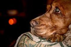 Puppy dog nose macro detail close up Stock Photo