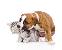 Puppy dog playing with kitten. isolated on white background Stock Photos