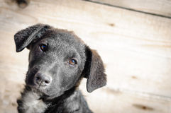 Puppy dog portrait copy space Royalty Free Stock Images