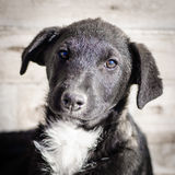 Puppy dog portrait Stock Photography