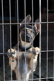 Puppy in the dog pound. Shepherd dog puppy in the pound stock photos