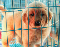 Puppy in the dog pound. Little puppy in the cage Royalty Free Stock Photo