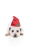 Puppy dog with  Red Santa Hat. A white puppy dog lying with head resting on ground and wearing a red Christmas Santa hat.  White background Royalty Free Stock Photography