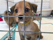 Puppy Dog at a rescue shelter in a cage stock image