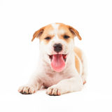 Puppy Dog Stock Image