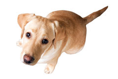 Puppy dog. Sitting little dog looking at you isolated on white Stock Photo
