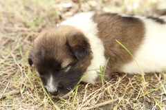 Puppy dog sleeping Stock Photo