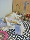 Puppy dog sleeping on his back in kennel Stock Image