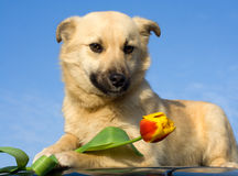 Puppy dog smelling flower 1 Royalty Free Stock Photo