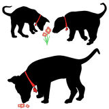 Puppy Dog Sniffing Flowers Silhouettes Stock Photo