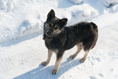 Puppy dog in snow winter Stock Photos