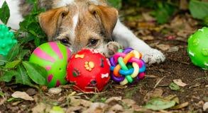Free Puppy Dog Toys Stock Image - 186909151
