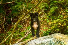 The puppy dog verry cute is standing in the forest. Mammal. Dog. Pet. Portrait. Olfactory. Canis lupus. Domestic dog. royalty free stock photo