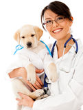 Puppy dog at the vet Stock Photos
