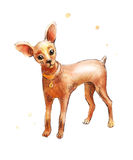Puppy dog in watercolor. Toy Terrier drawing  Royalty Free Stock Photos