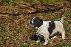 Puppy dog white black Stock Image