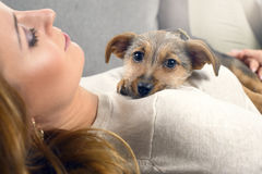 Puppy dog and woman Royalty Free Stock Image