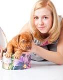 Puppy of Dogue de Bordeaux (French mastiff) Stock Photos