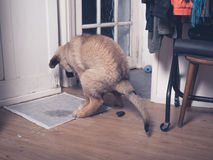 Puppy doing a poo on the floor Royalty Free Stock Photos