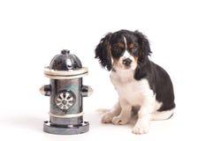 Puppy door Brandkraan Stock Afbeeldingen