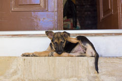 Puppy on the doorstep Royalty Free Stock Photo