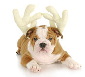 Puppy dressed as reindeer Stock Photo