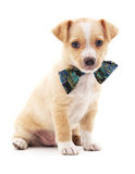 Puppy dressed in butterfly. Stock Photos