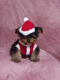 A Puppy Dressed in a Santa Suit Royalty Free Stock Photo