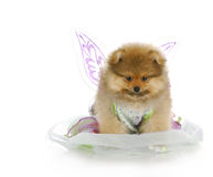 Puppy dressed up as an angel Stock Photo