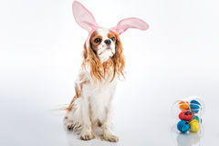 Puppy easter eggs Stock Images