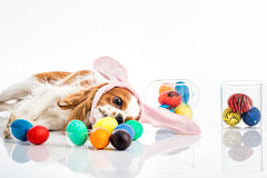 Puppy easter eggs Stock Image