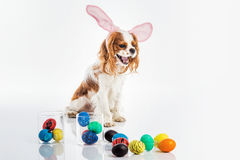 Puppy easter eggs Royalty Free Stock Photography