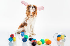 Puppy easter eggs Royalty Free Stock Photo