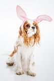 Puppy easter eggs stock photography