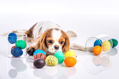 Puppy easter eggs Royalty Free Stock Image