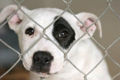 Puppy in een kooi royalty-vrije stock fotografie