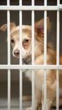 Puppy in een kooi Stock Afbeelding
