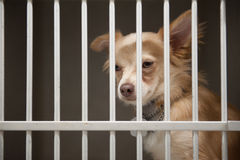 Puppy in een kooi Royalty-vrije Stock Foto's