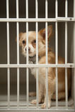 Puppy in een kooi Stock Afbeeldingen