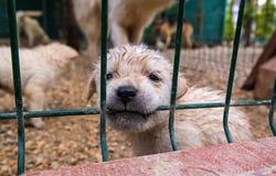 Puppy in een kooi royalty-vrije stock afbeelding